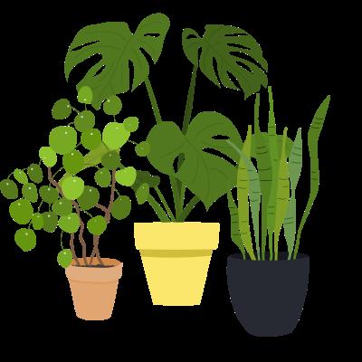 plant-min